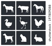 pets icon set | Shutterstock . vector #197809088