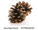 brown pine cone isolated on... | Shutterstock . vector #197844020