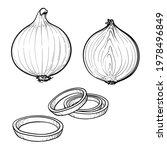 hand drawn onion  half an onion ... | Shutterstock .eps vector #1978496849