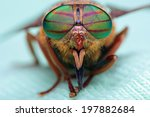 Eyes of an insect. portrait of...