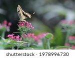 Butterfly Sanctuary In La Paz...