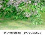 Closeup Image Of White Flowers  ...