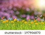 summer background with grass... | Shutterstock . vector #197906870