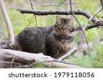 Feral Cat In Quebec  Canada