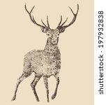 deer engraving style  vintage... | Shutterstock .eps vector #197932838