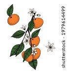 tangerines on a branch in... | Shutterstock .eps vector #1979614499