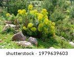 yellow wild flowers growing in... | Shutterstock . vector #1979639603