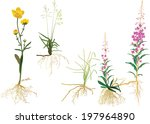 illustration with wild plants... | Shutterstock . vector #197964890