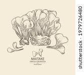 background with maitake  piece... | Shutterstock .eps vector #1979726480