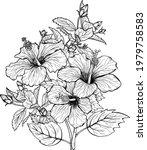 hand drawn bouquet of hibiscus...   Shutterstock .eps vector #1979758583