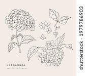 hand draw vector hydrangea... | Shutterstock .eps vector #1979786903