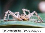 Spider On Tree Leaf Background  ...