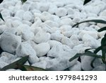 Decorative small white stone pebbles with green leaves. Background, texture, banner