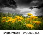 Spring Meadow With Dandelions...