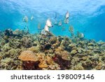 Shoal Of Batfish And Other Ree...