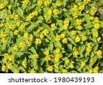 Natural Background Image Of...