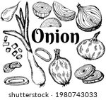 onions set. bulbs and  halved ... | Shutterstock .eps vector #1980743033
