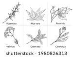 set of hand drawn plants  aloe... | Shutterstock .eps vector #1980826313