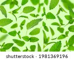 Fresh Flying Green Mint Leaves  ...