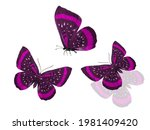 Pink Butterflies Isolated On A...