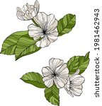 pear flowers and leaves...   Shutterstock .eps vector #1981462943