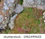 Alpine Type Wild Plants Growing ...