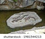 Crocodiles Sunbathing On A Rock