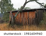 Old Wooden Shack With Dead Tree
