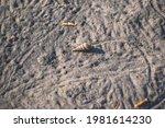 A Small Hermit Crab Crawls...
