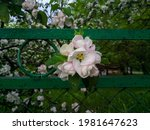 Close Up Of One Branch Of A...