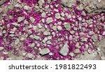 Pink Flower Petals Covering...