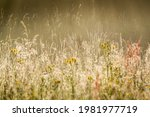 Beautiful Meadow During A...