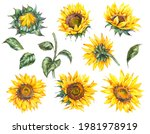 Watercolor Set Of  Sunflowers...
