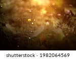 summer meadow with daisies ...   Shutterstock . vector #1982064569