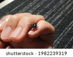 Jumping Spiders That Live In...