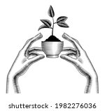 female hands hold a plant with... | Shutterstock .eps vector #1982276036