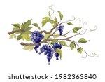 grapevine   vector illustration.... | Shutterstock .eps vector #1982363840
