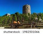 Wine Vineyard In Akhaltsikhe....