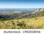 Nature Along The Way To Mesa...