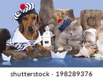 Cat And Dog  Dachshund And...
