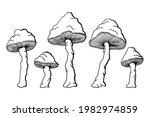 Inedible Mushrooms Black And...