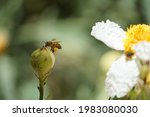 Photograph Of A Bee Carrying...
