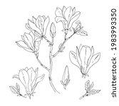 magnolia. vector sketch of... | Shutterstock .eps vector #1983993350