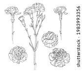 carnation vector sketch of... | Shutterstock .eps vector #1983993356
