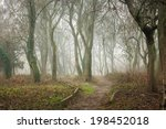morning walks on trail between trees in fog - stock photo