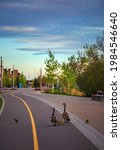 Small photo of A gaggle of geese walking down a city pathway