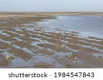 Plow Furrows And Traces Of The...