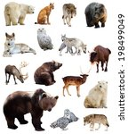 Set of european animals....