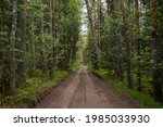 Dirt Road In Latvian Forest...