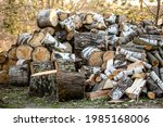 A Big Pile Round Cuts Of Wood....